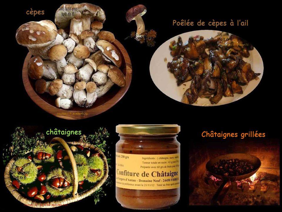 cèpes Poêlée de cèpes à l'ail châtaignes Châtaignes grillées courtesy : fr.academic.ru courtesy of : Robert M.