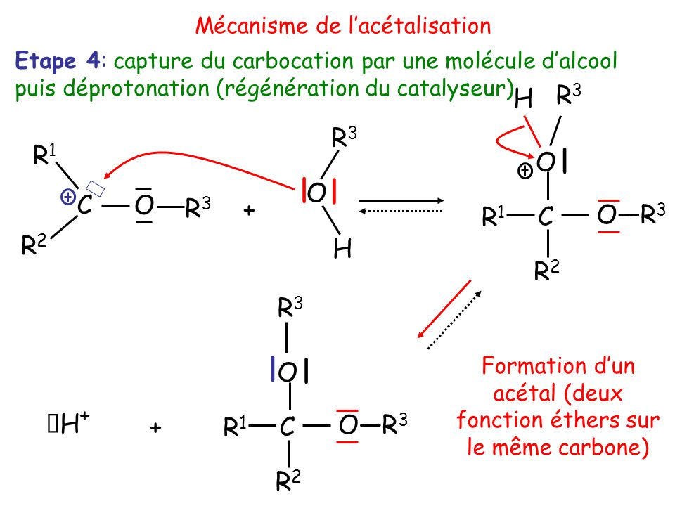 R2R2 O C R3R3 R1R1 + H O R3R3 | | R3R3 O—R 3 | C O R2R2 R1R1 H R3R3 | C O R2R2 R1R1 | + H+H+ Etape 4: capture du carbocation par une molécule d'alcool puis déprotonation (régénération du catalyseur) Formation d'un acétal (deux fonction éthers sur le même carbone) Mécanisme de l'acétalisation