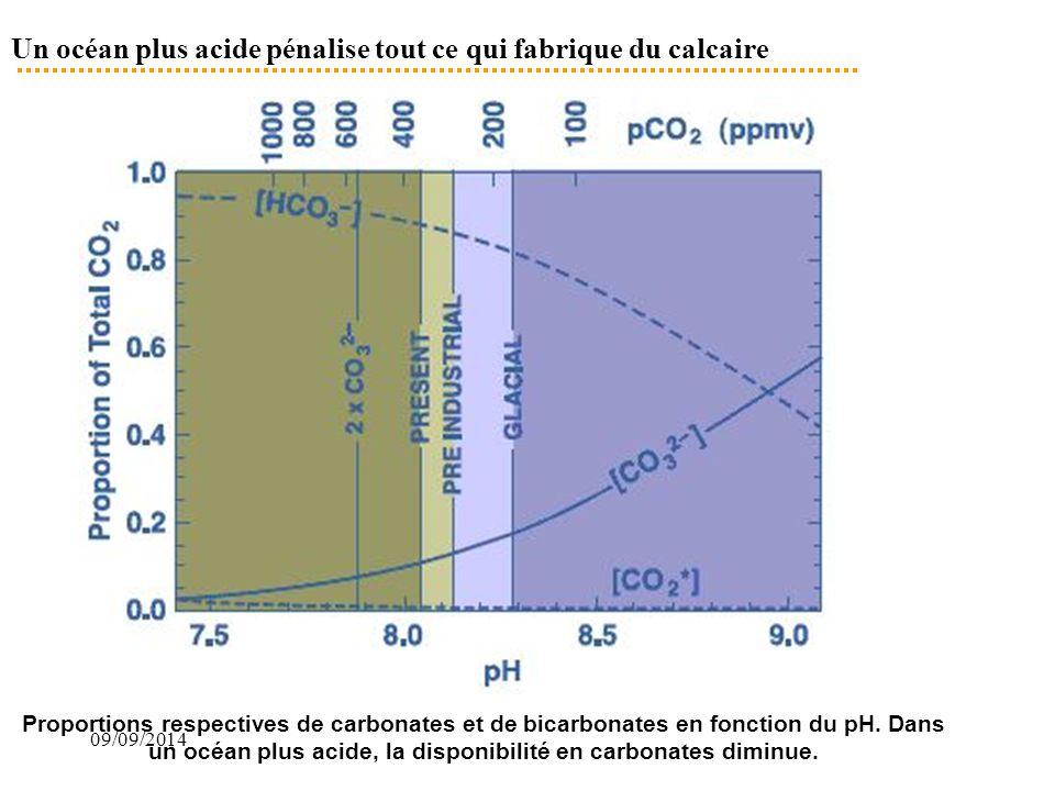 09/09/2014 Un océan plus acide pénalise tout ce qui fabrique du calcaire Proportions respectives de carbonates et de bicarbonates en fonction du pH. D