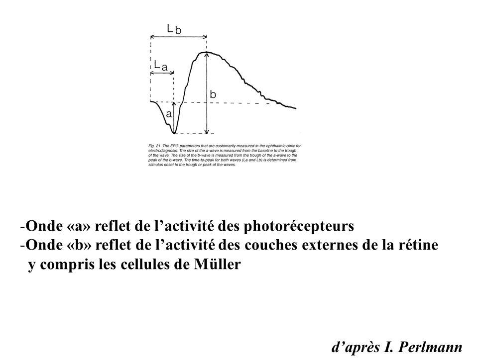 d'après I. Perlmann -Onde «a» reflet de l'activité des photorécepteurs -Onde «b» reflet de l'activité des couches externes de la rétine y compris les
