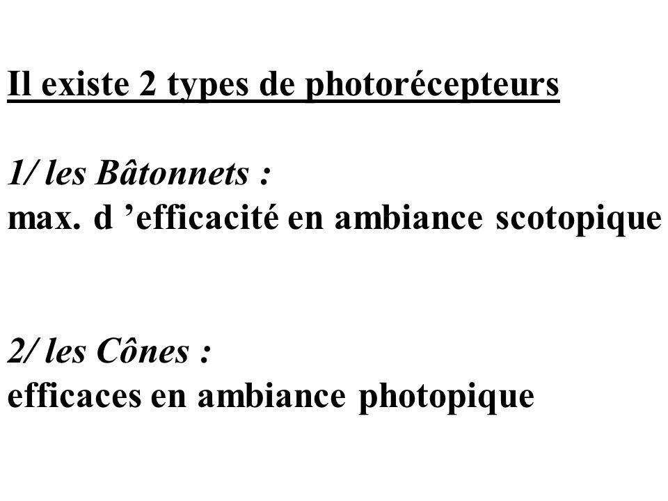 Il existe 2 types de photorécepteurs 1/ les Bâtonnets : max. d 'efficacité en ambiance scotopique 2/ les Cônes : efficaces en ambiance photopique