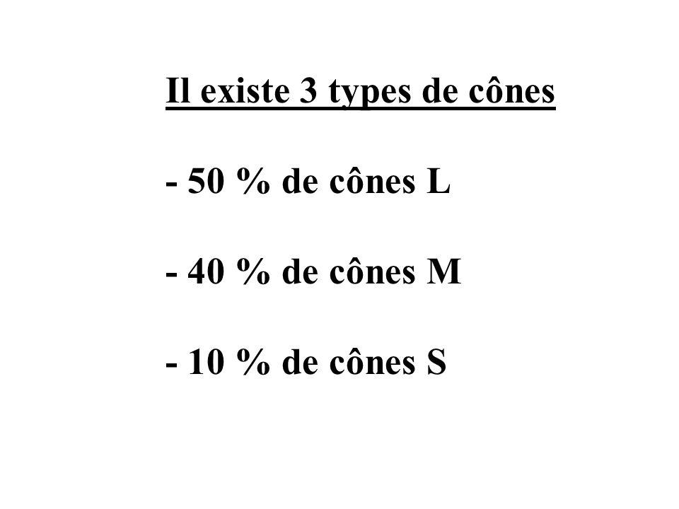 Il existe 3 types de cônes - 50 % de cônes L - 40 % de cônes M - 10 % de cônes S