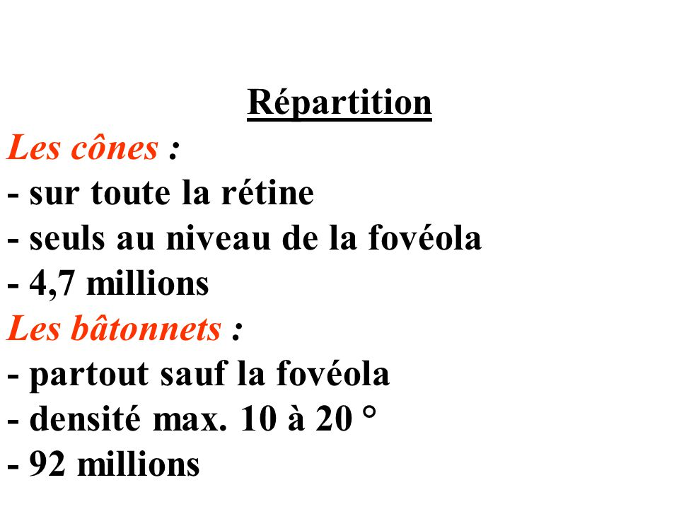 Répartition Les cônes : - sur toute la rétine - seuls au niveau de la fovéola - 4,7 millions Les bâtonnets : - partout sauf la fovéola - densité max.