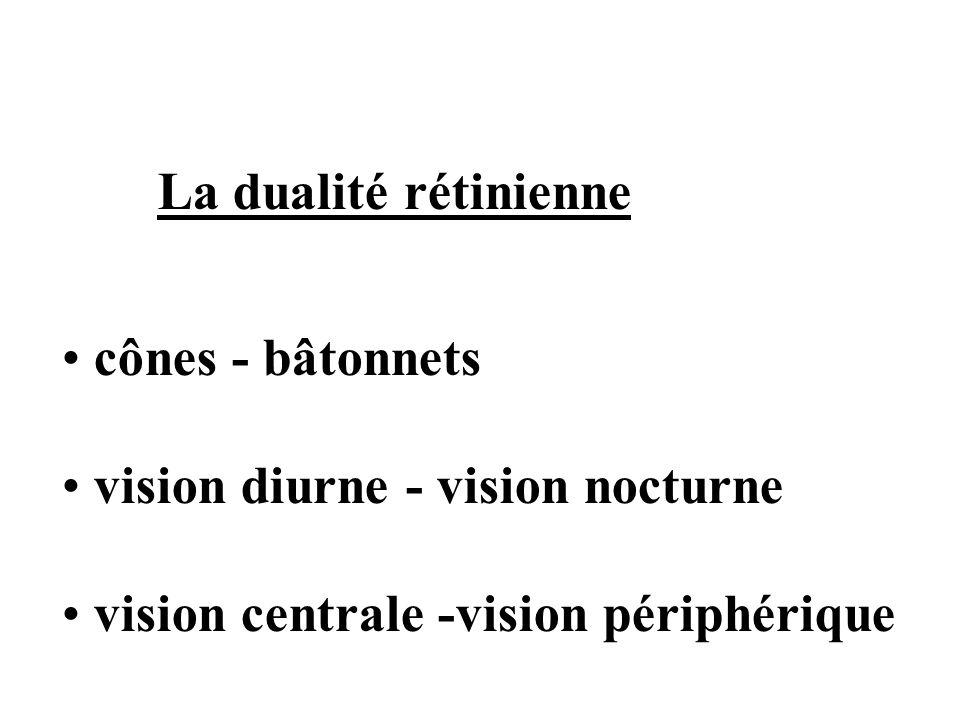 La dualité rétinienne cônes - bâtonnets vision diurne - vision nocturne vision centrale -vision périphérique