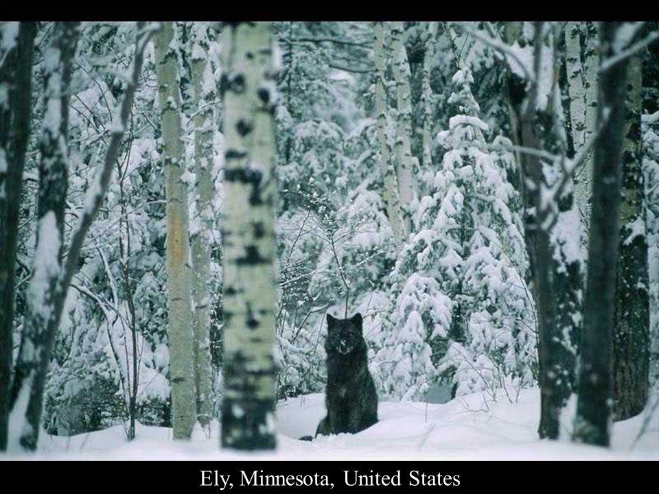 Ely, Minnesota, United States