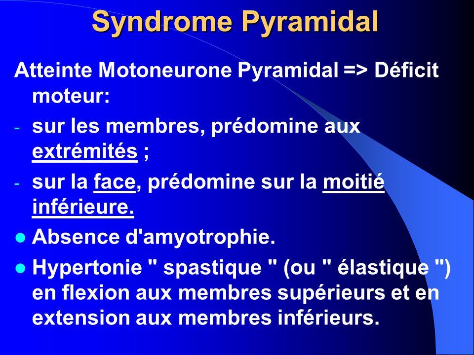 Syndrome Pyramidal Atteinte Motoneurone Pyramidal => Déficit moteur: - sur les membres, prédomine aux extrémités ; - sur la face, prédomine sur la moi