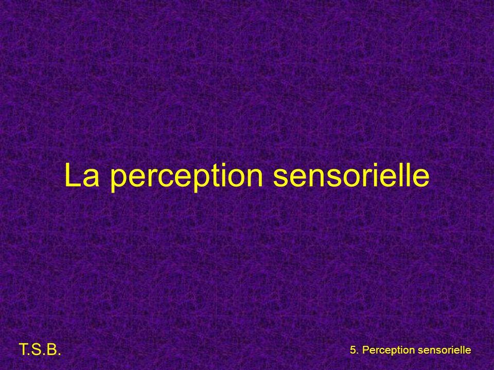 T.S.B. 5. Perception sensorielle La perception sensorielle