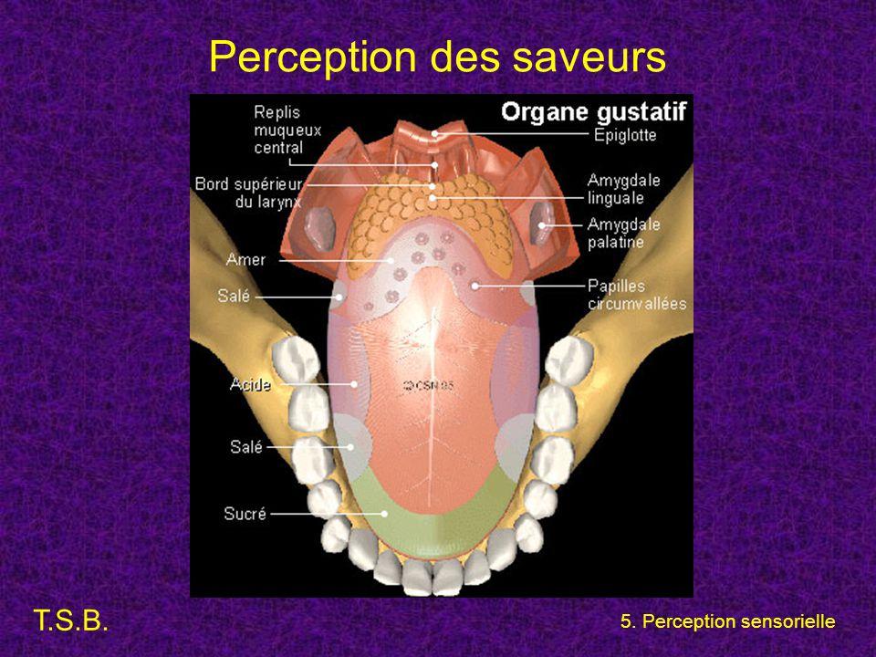 T.S.B. 5. Perception sensorielle Perception des saveurs
