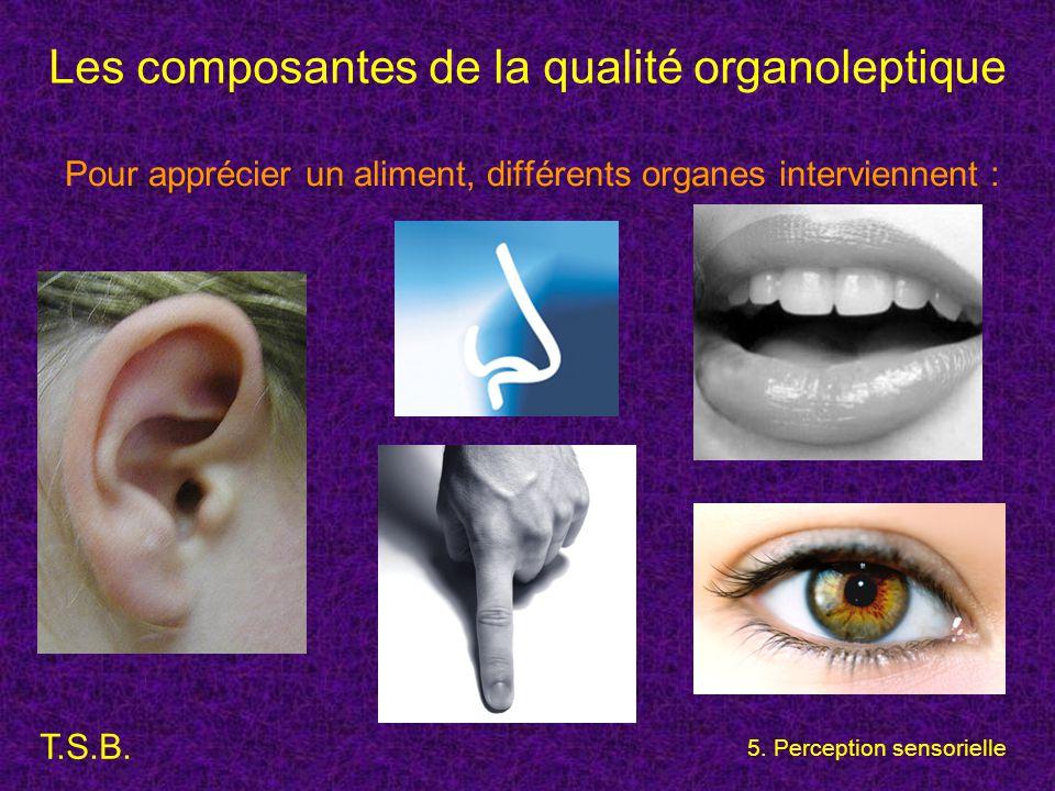 T.S.B. 5. Perception sensorielle Les composantes de la qualité organoleptique Pour apprécier un aliment, différents organes interviennent :