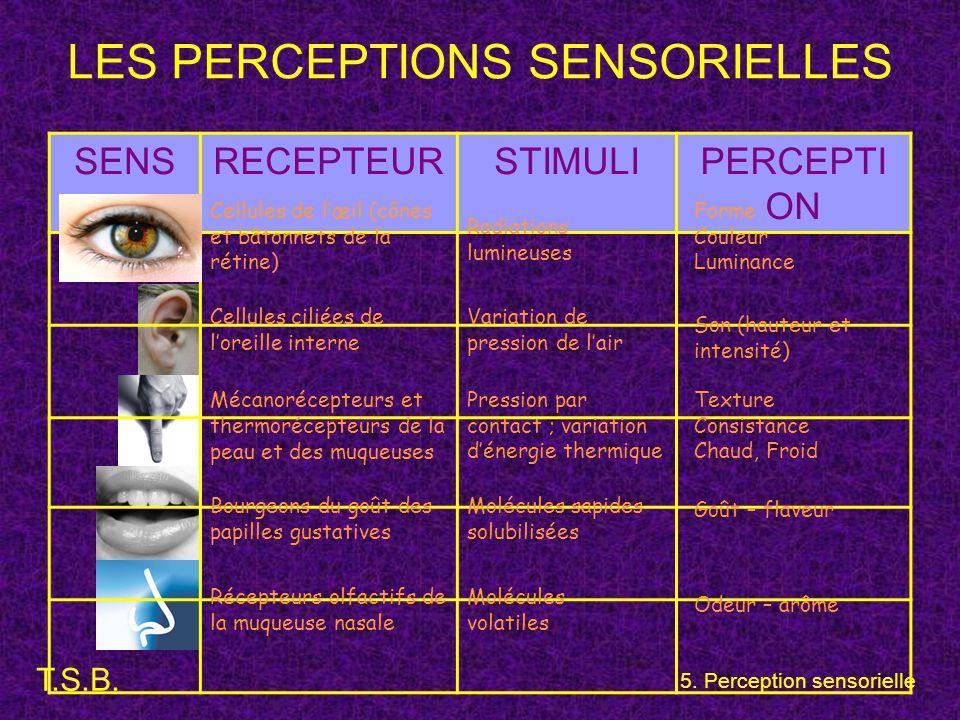 T.S.B. 5. Perception sensorielle LES PERCEPTIONS SENSORIELLES SENSRECEPTEURSTIMULIPERCEPTI ON Cellules de l'œil (cônes et bâtonnets de la rétine) Cell