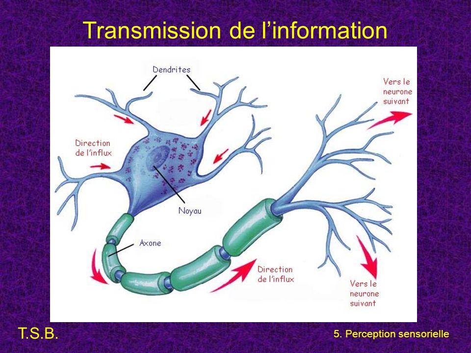 T.S.B. 5. Perception sensorielle Transmission de l'information