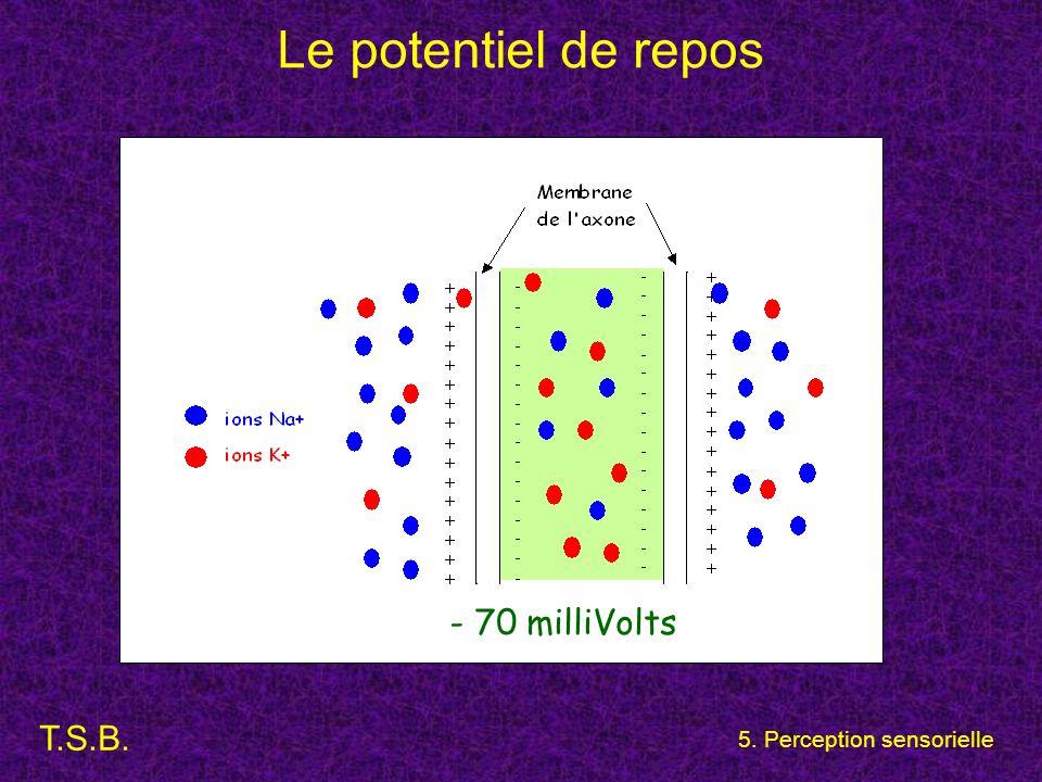 T.S.B. 5. Perception sensorielle Le potentiel de repos - 70 milliVolts