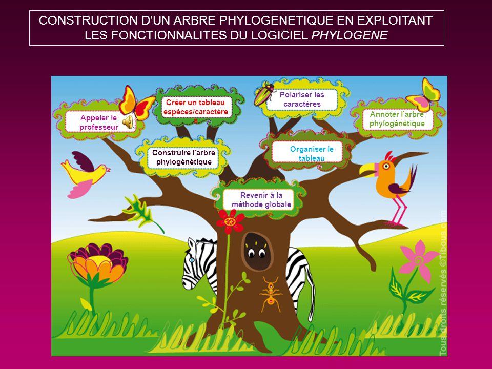 CONSTRUCTION D'UN ARBRE PHYLOGENETIQUE EN EXPLOITANT LES FONCTIONNALITES DU LOGICIEL PHYLOGENE Créer un tableau espèces/caractère s Polariser les caractères Organiser le tableau Construire l'arbre phylogénétique Revenir à la méthode globale Appeler le professeur Annoter l'arbre phylogénétique