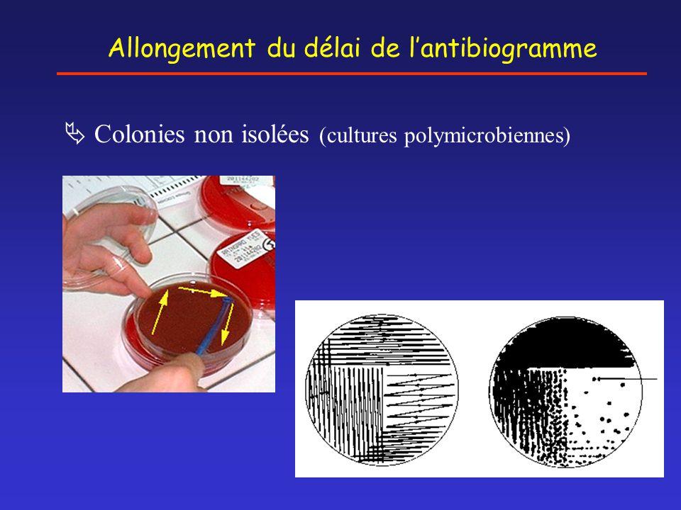 Allongement du délai de l'antibiogramme  Colonies non isolées (cultures polymicrobiennes)