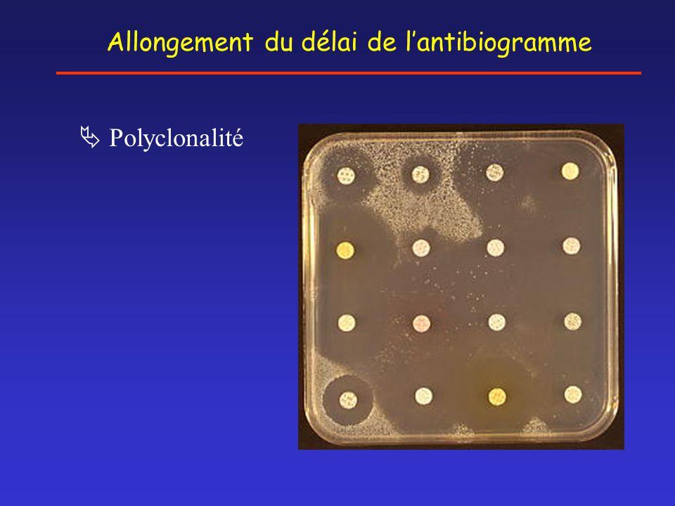  Polyclonalité Allongement du délai de l'antibiogramme