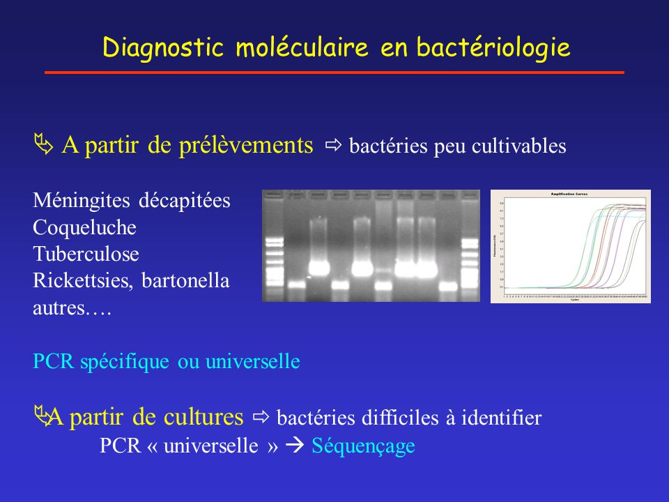 Diagnostic moléculaire en bactériologie  A partir de prélèvements  bactéries peu cultivables Méningites décapitées Coqueluche Tuberculose Rickettsie