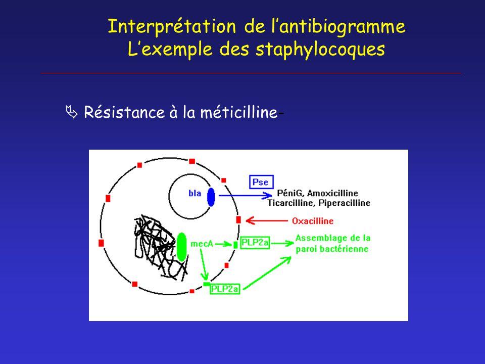 Interprétation de l'antibiogramme L'exemple des staphylocoques  Résistance à la méticilline-