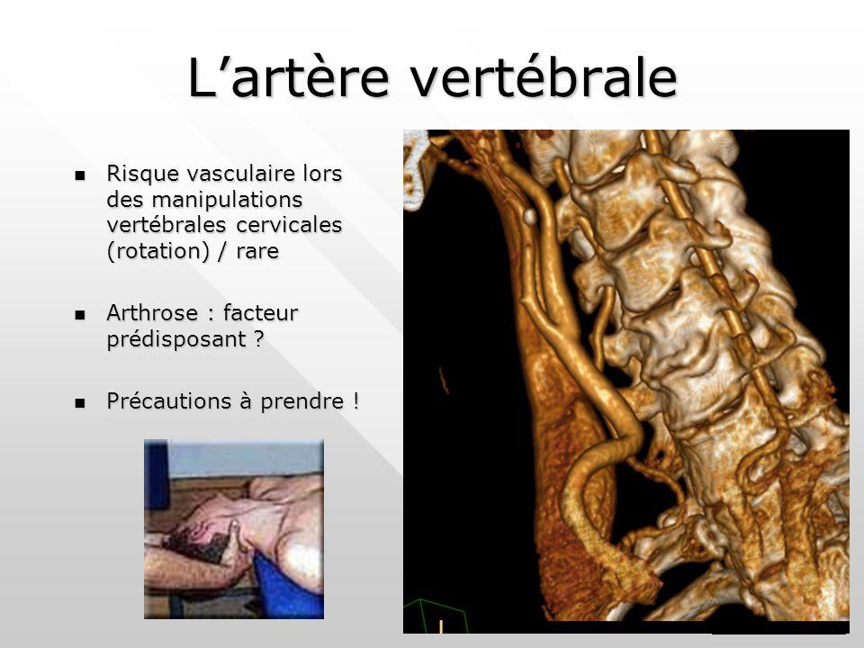 L'artère vertébrale Risque vasculaire lors des manipulations vertébrales cervicales (rotation) / rare Risque vasculaire lors des manipulations vertébrales cervicales (rotation) / rare Arthrose : facteur prédisposant .