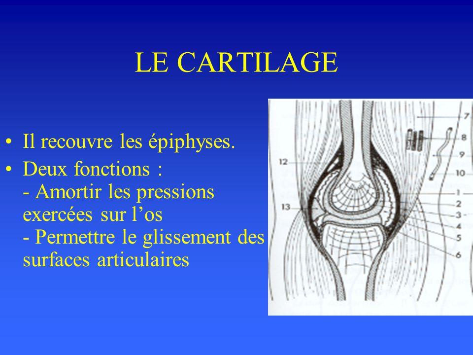 LES EPIPHYSES L'épiphyse osseuse est faite de tissu spongieux séparée du cartilage par une lame osseuse sous-chondrale Cette lame sous-chondrale, véri