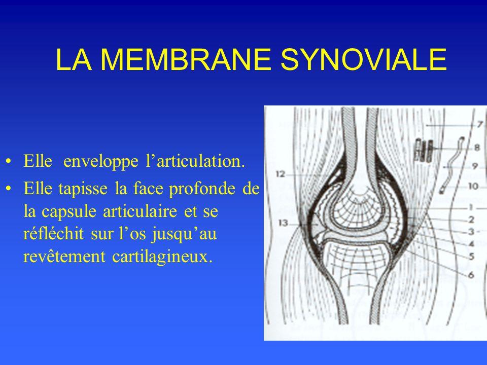 LA MEMBRANE SYNOVIALE Elle enveloppe l'articulation.