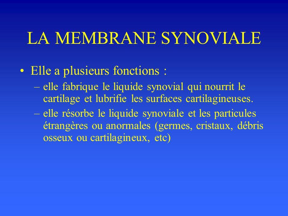 LA MEMBRANE SYNOVIALE Elle a plusieurs fonctions : –elle fabrique le liquide synovial qui nourrit le cartilage et lubrifie les surfaces cartilagineuses.
