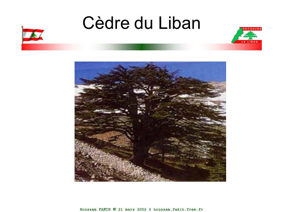 Houssam FAKIH  21 mars 2002 @ houssam.fakih.free.fr Cèdre du Liban