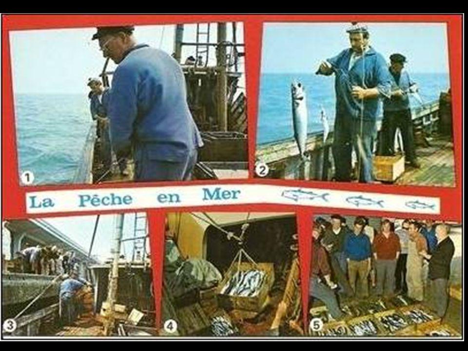 Préparatifs pour la pêche