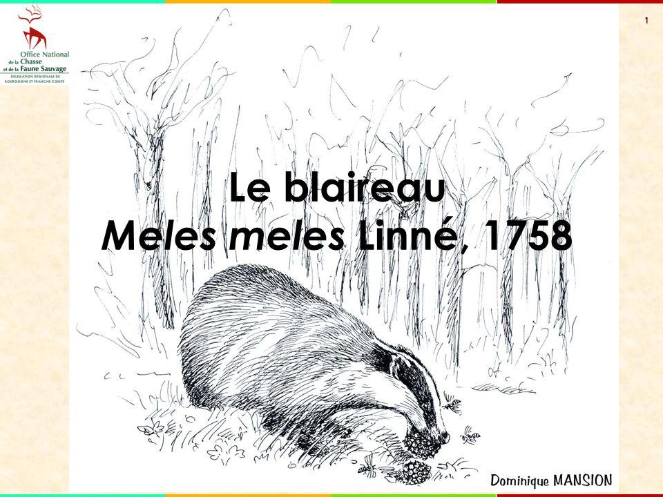 1 Le blaireau Meles meles Linné, 1758