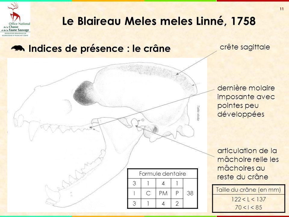 11 Le Blaireau Meles meles Linné, 1758 Formule dentaire 3141 38 ICPMP 3142 Taille du crâne (en mm) 122 < L < 137 70 < l < 85 crête sagittale dernière