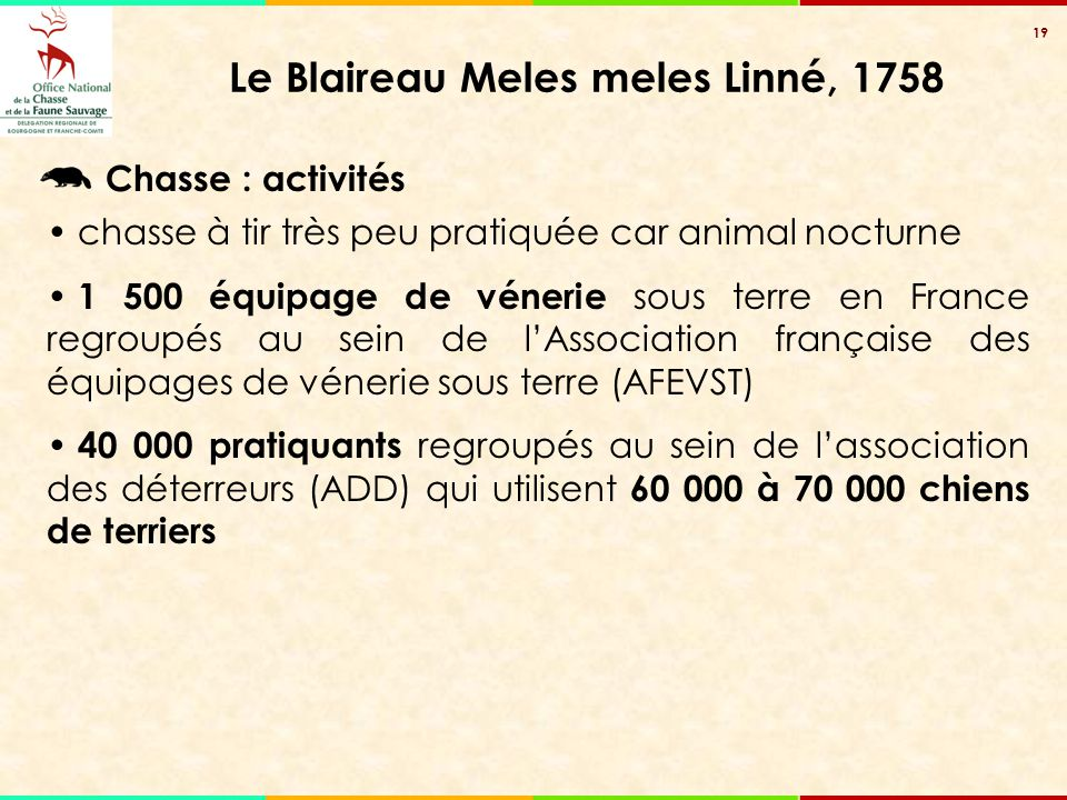 19 Le Blaireau Meles meles Linné, 1758 chasse à tir très peu pratiquée car animal nocturne 1 500 équipage de vénerie sous terre en France regroupés au