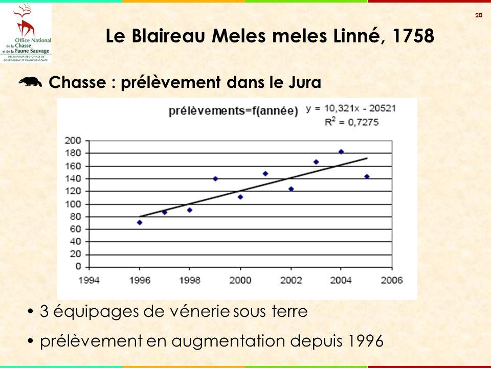20 Le Blaireau Meles meles Linné, 1758 Chasse : prélèvement dans le Jura 3 équipages de vénerie sous terre prélèvement en augmentation depuis 1996