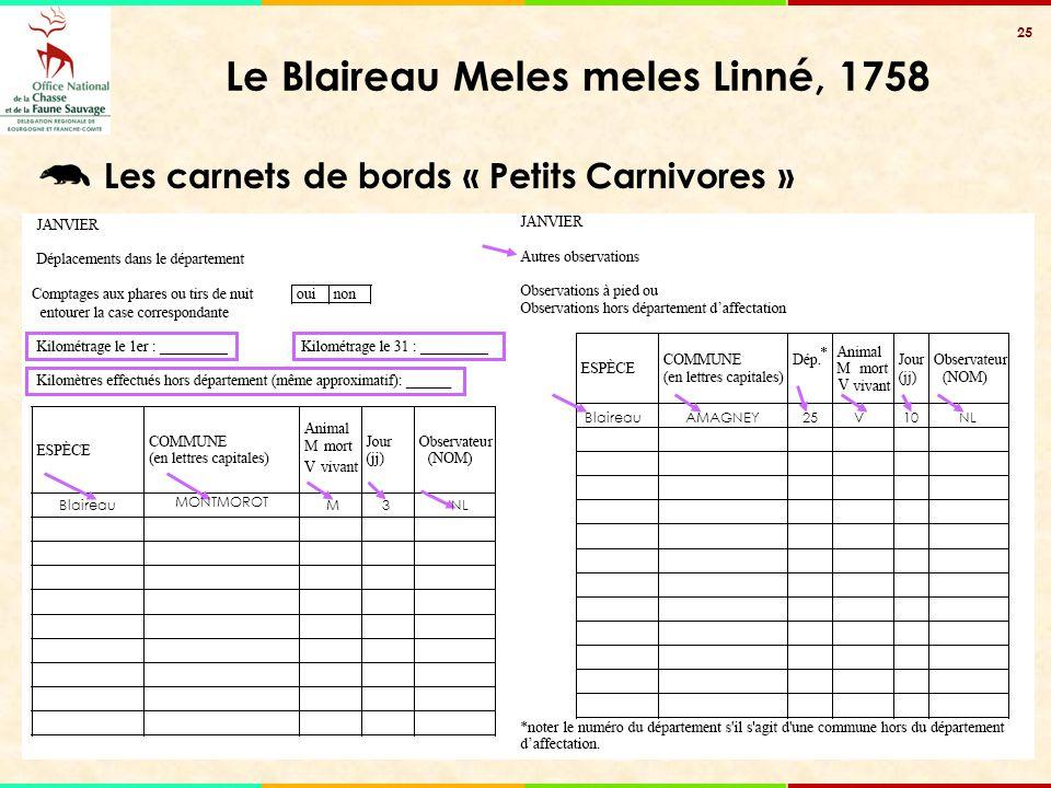 25 Le Blaireau Meles meles Linné, 1758 Blaireau MONTMOROT M3NL BlaireauAMAGNEY25V10 Les carnets de bords « Petits Carnivores »