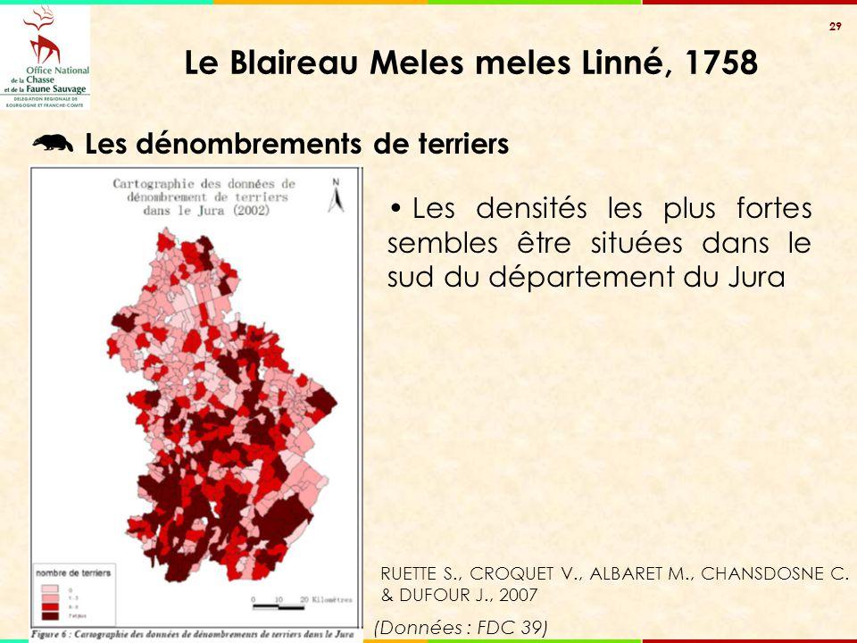 29 Le Blaireau Meles meles Linné, 1758 Les dénombrements de terriers Les densités les plus fortes sembles être situées dans le sud du département du J