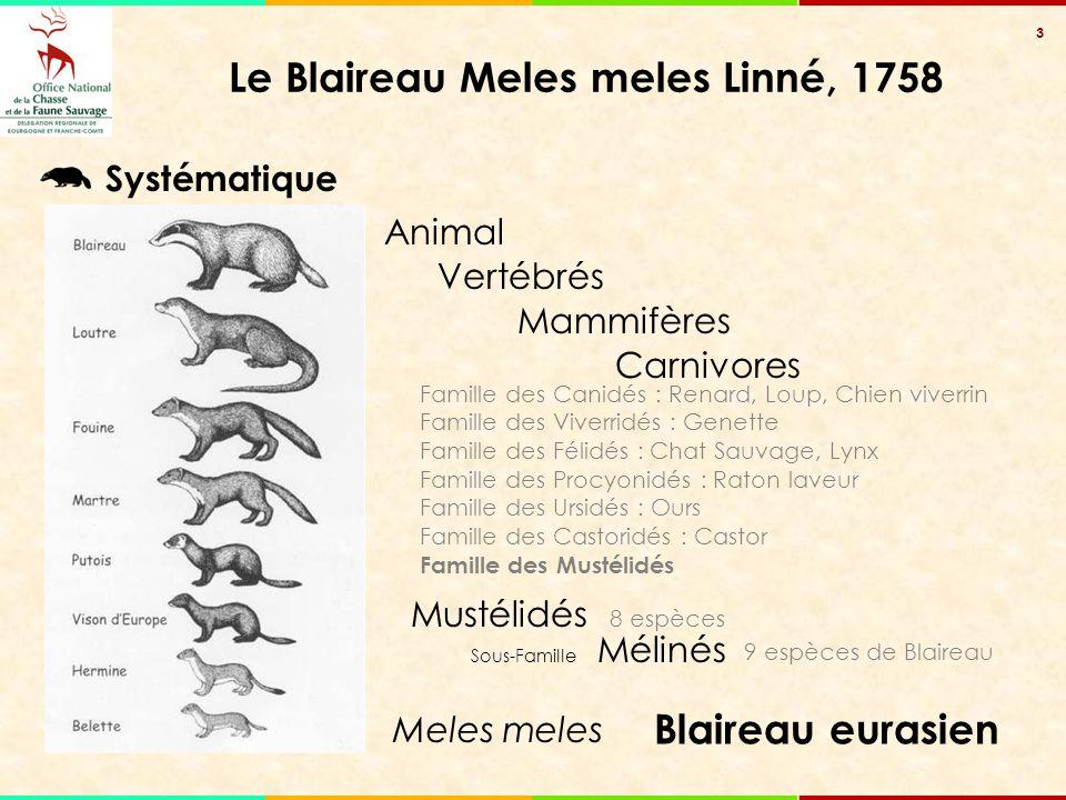 3 Famille des Canidés : Renard, Loup, Chien viverrin Famille des Viverridés : Genette Famille des Félidés : Chat Sauvage, Lynx Famille des Procyonidés