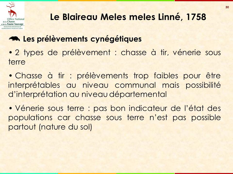 30 Le Blaireau Meles meles Linné, 1758 Les prélèvements cynégétiques 2 types de prélèvement : chasse à tir, vénerie sous terre Chasse à tir : prélèvem