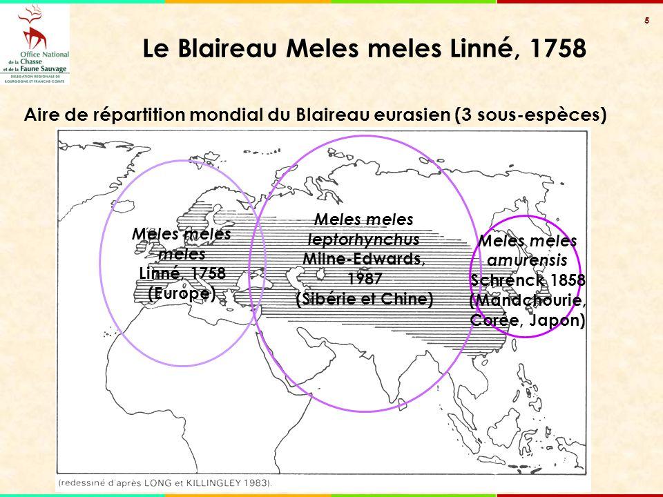 5 Le Blaireau Meles meles Linné, 1758 Meles meles meles Linné, 1758 (Europe) Meles meles leptorhynchus Milne-Edwards, 1987 (Sibérie et Chine) Meles me