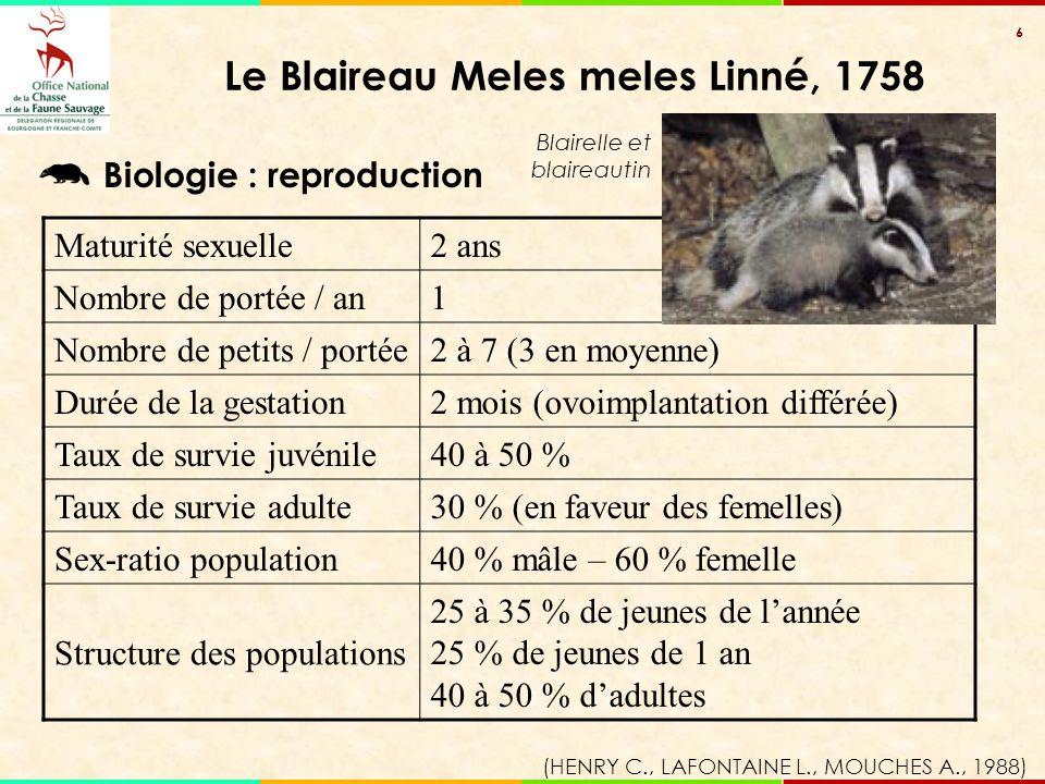 6 Maturité sexuelle2 ans Nombre de portée / an1 Nombre de petits / portée2 à 7 (3 en moyenne) Durée de la gestation2 mois (ovoimplantation différée) T