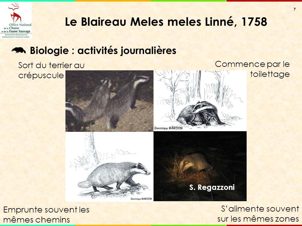 7 Le Blaireau Meles meles Linné, 1758 S. Regazzoni Emprunte souvent les mêmes chemins Sort du terrier au crépuscule Commence par le toilettage S'alime