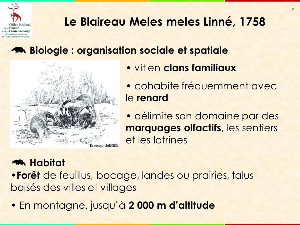 9 Le Blaireau Meles meles Linné, 1758 vit en clans familiaux cohabite fréquemment avec le renard délimite son domaine par des marquages olfactifs, les