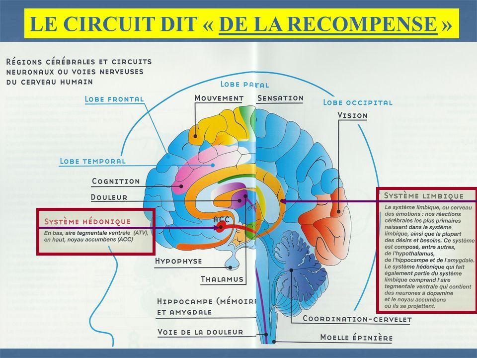 LE CIRCUIT DIT « DE LA RECOMPENSE » TOUTE VALORISATION IDENTITAIRE AUGMENTE LE TAUX DE DOPAMINE. DES FRUSTRATIONS IDENTITAIRES REPETEES DIMINUENT LE T