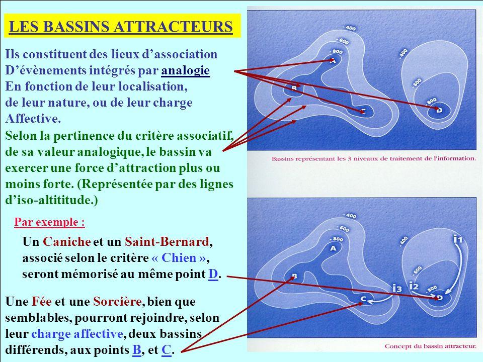 REPRESENTATION SPATIALE DES BASSINS ATTRACTEURS Ils sont acquis, se forment et se creusent au cours du développement.
