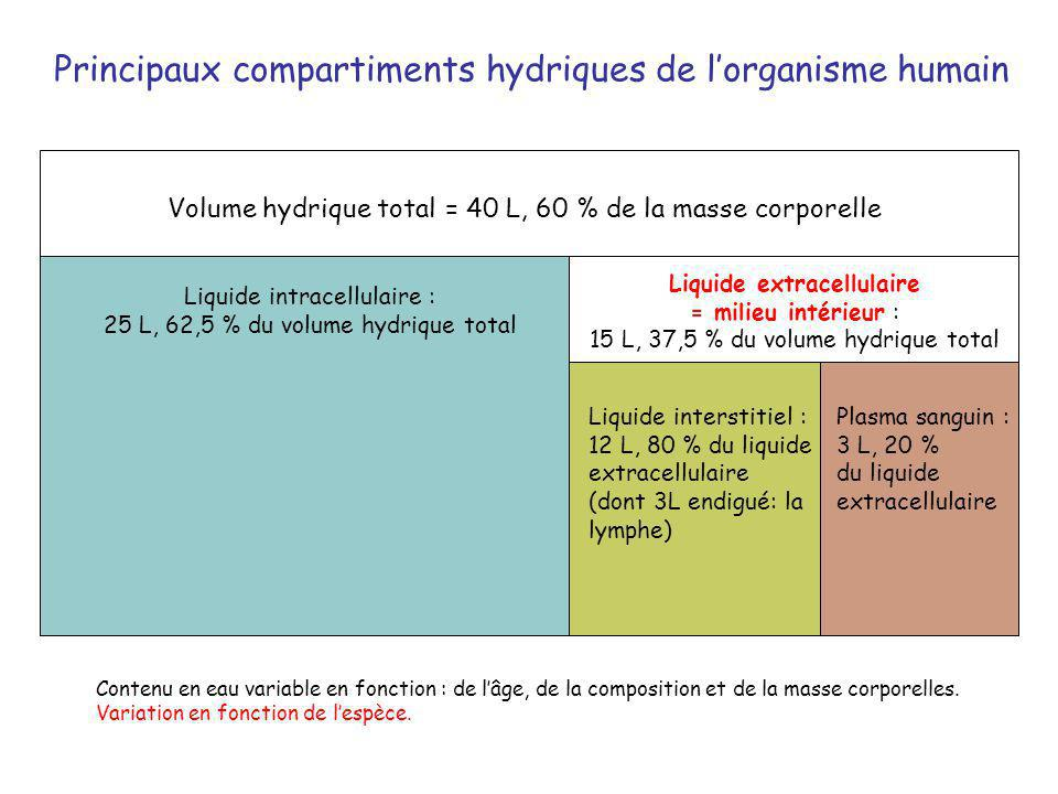 RELATIONS ENTRE LES DIFFÉRENTS COMPARTIMENTS DU MILIEU INTÉRIEUR (1) POUMONS AUTRES ORGANES DÉTAIL des 3 COMPARTIMENTS et DE LA FORMATION DE LA LYMPHE Au niveau des capillaires LYMPHE LIQUIDE INTERST.