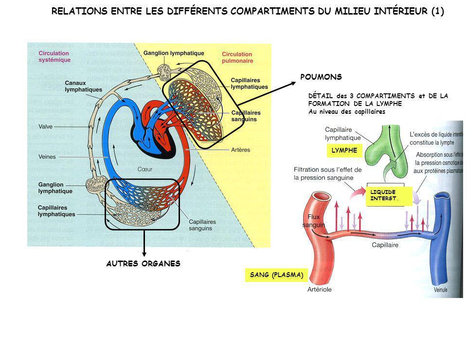 LE SANG: MILIEU INTÉRIEUR QUI PERMET les RELATIONS (échanges de matière) ENTRE LES ORGANES POUR ASSURER LA FONCTION DE NUTRITION (sens large!) RESPIRATION EXCRÉTION DIGESTION ET APPORT DE NUTRIMENTS Poumons Intestin Reins Autres organes En violet: organes spécialisés dans les échanges milieu extérieur/organisme