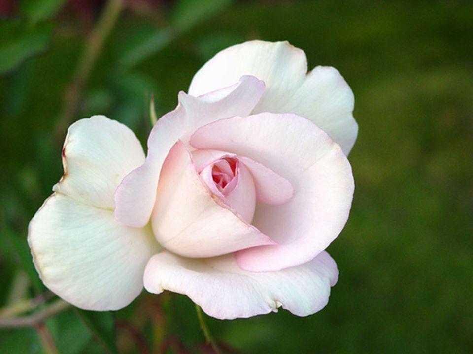 Aimer les caresses de la vie… Amadouez-vous sans soucis… Accepter sa destinée inattendue… Vibrer avec passion sous le charme… Goûter cette fraîcheur avec calme… Soyez persuadés que vous avez atteint votre but…