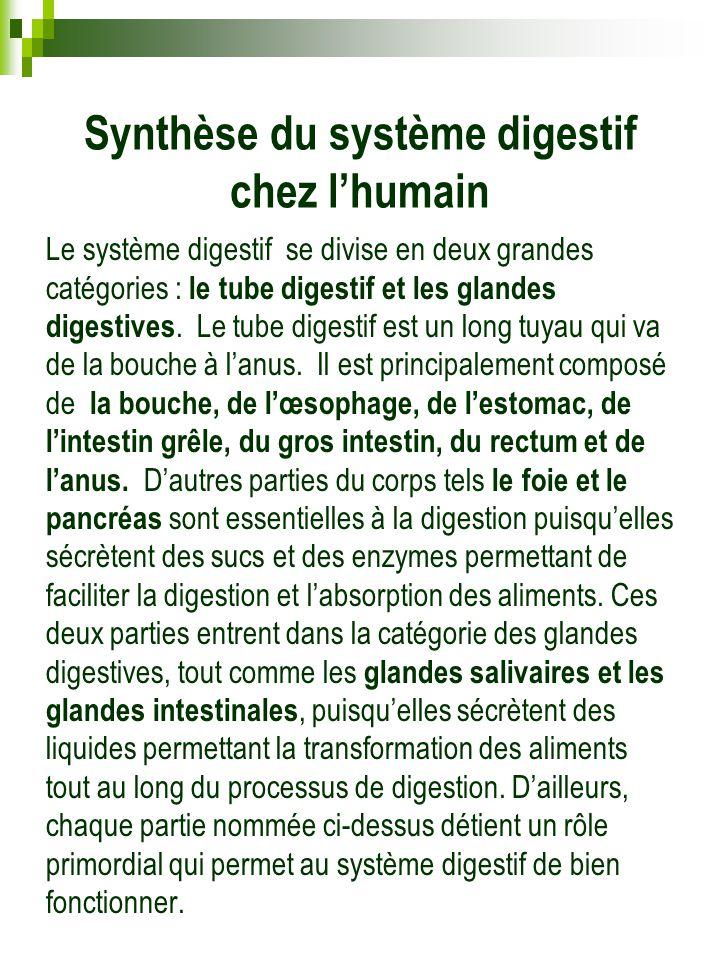 Synthèse du système digestif chez l'humain Le système digestif se divise en deux grandes catégories : le tube digestif et les glandes digestives. Le t