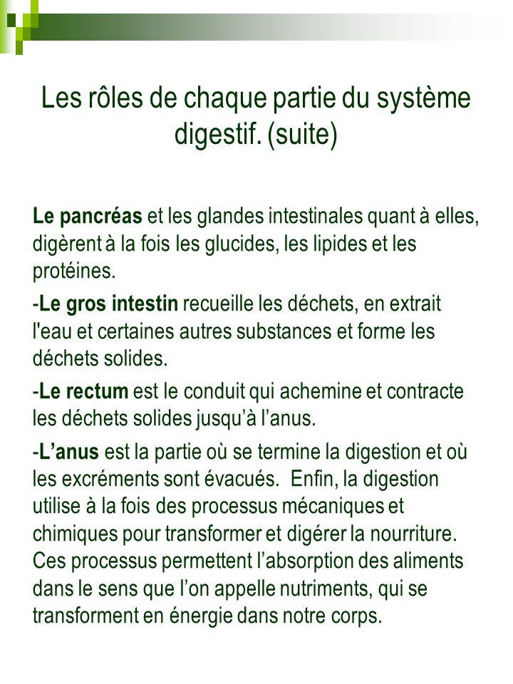 Les rôles de chaque partie du système digestif. (suite) Le pancréas et les glandes intestinales quant à elles, digèrent à la fois les glucides, les li