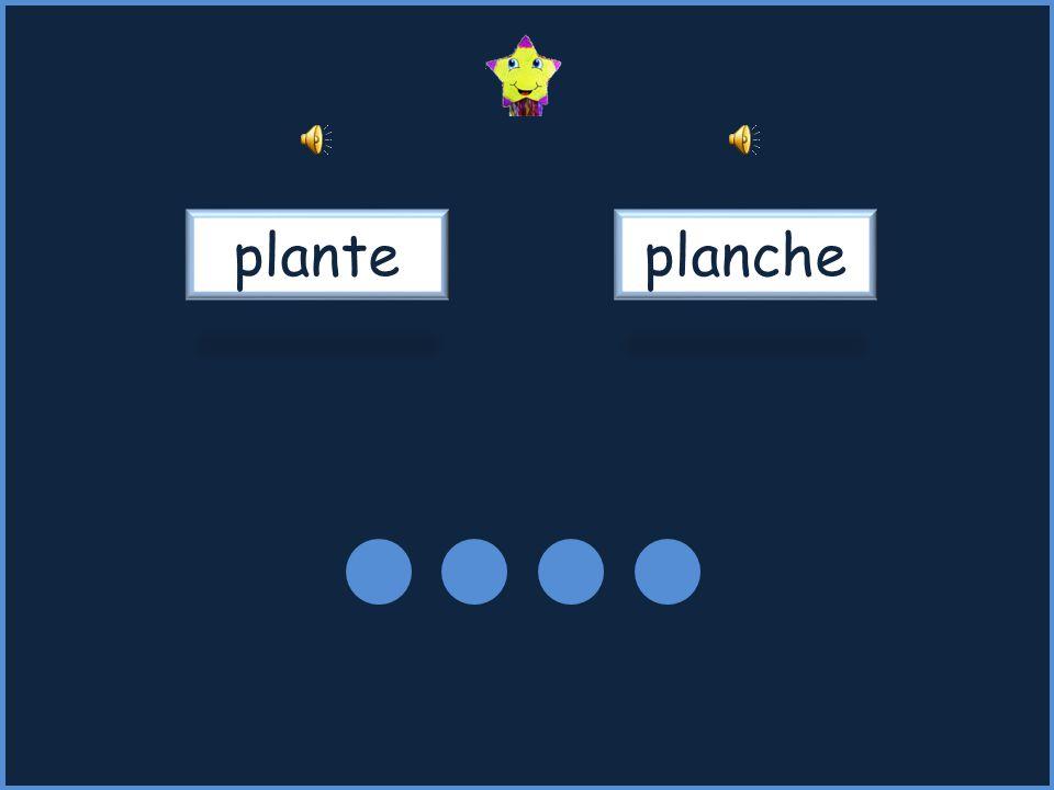planteplanche
