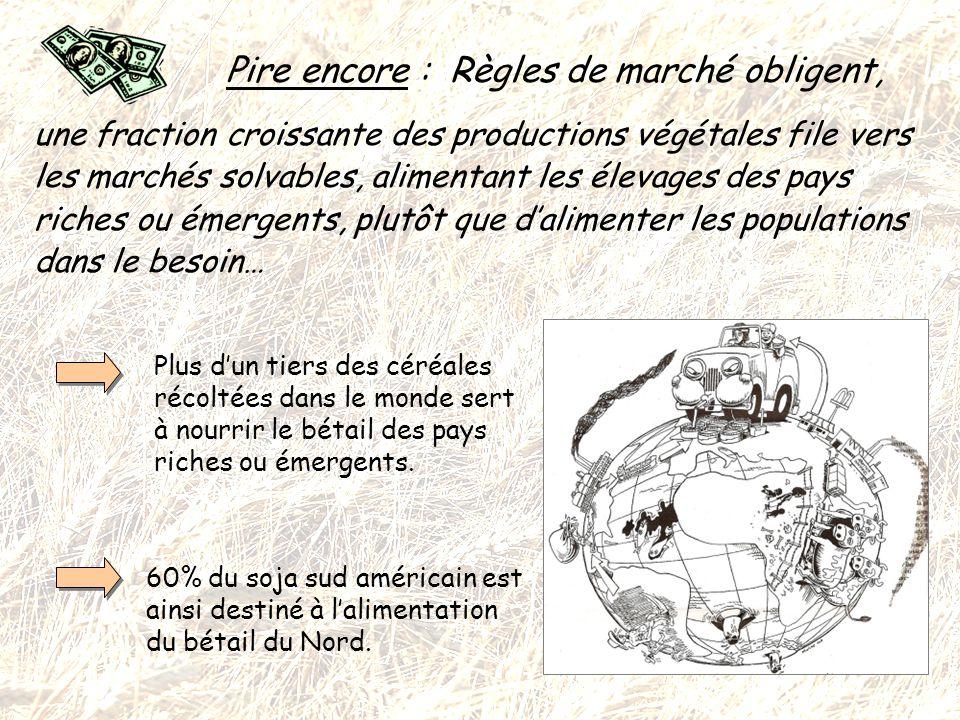 En Résumé : Nous, français et autres occidentaux (même dits « modestes »), sommes en fait directement impliqués dans la crise alimentaire mondiale .