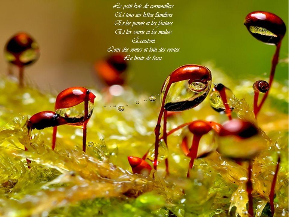 Le petit bois de cornouillers Et tous ses hôtes familiers Et les putois et les fouines Et les souris et les mulots Écoutent Loin des sentes et loin des routes Le bruit de l eau.