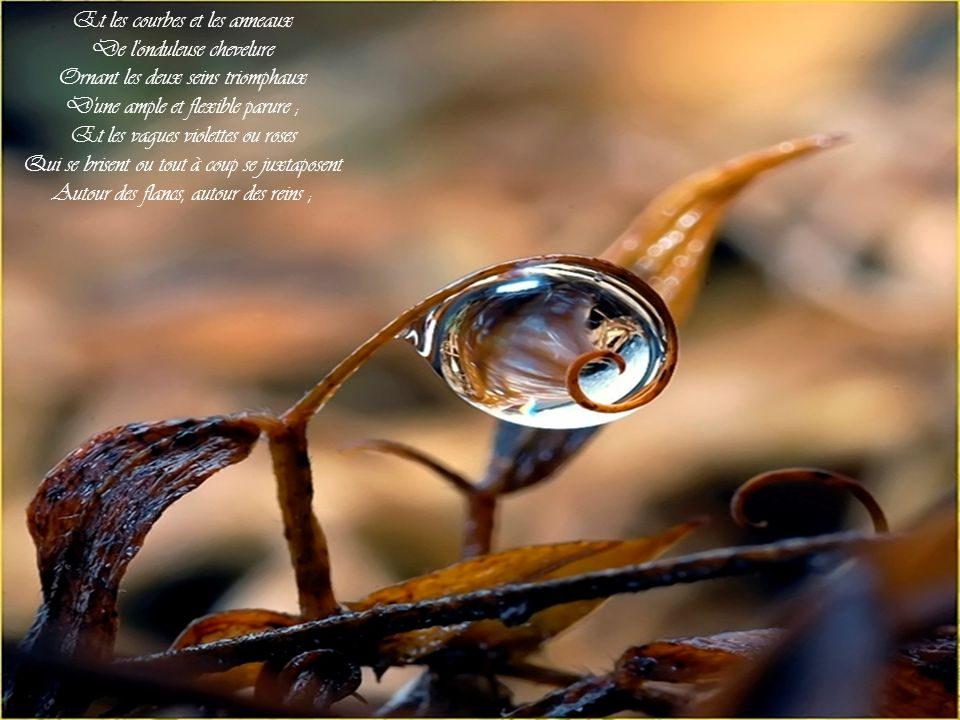 Et les courbes et les anneaux De l onduleuse chevelure Ornant les deux seins triomphaux D une ample et flexible parure ; Et les vagues violettes ou roses Qui se brisent ou tout à coup se juxtaposent Autour des flancs, autour des reins ;